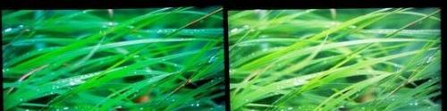 液晶电视的画面受到背光源干扰,导致冲淡了色彩表现(左为OLED产品右边是液晶电视)